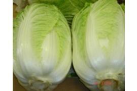 BU-Chinese-Cabbage-1